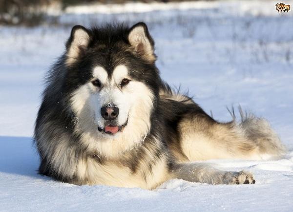 Peluang Usaha Bisnis Anjing Ras