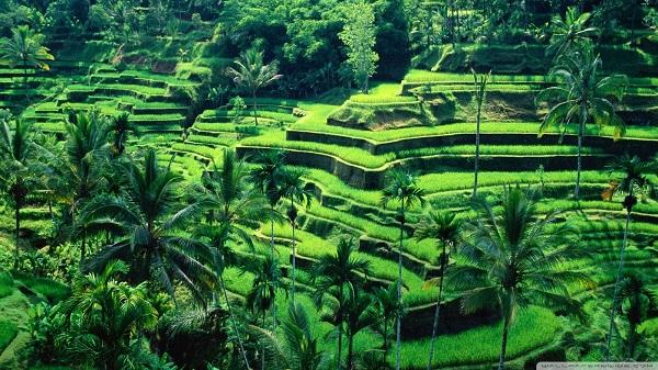 Mengapa Indonesia Terus Miskin