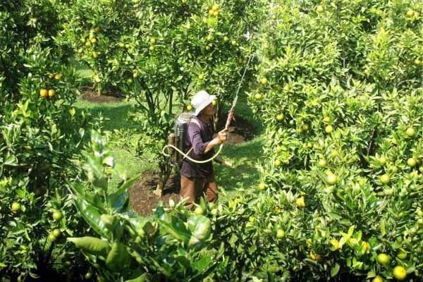 Peluang Bisnis Peternakan Dan Perkebunan