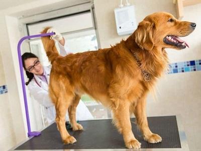 Peluang Bisnis Anjing Ras Menjanjikan