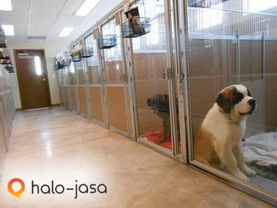 Peluang Bisnis Anjing Ras Menjanjikan 12